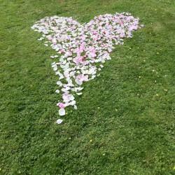 Hjärta av ros & pionblad