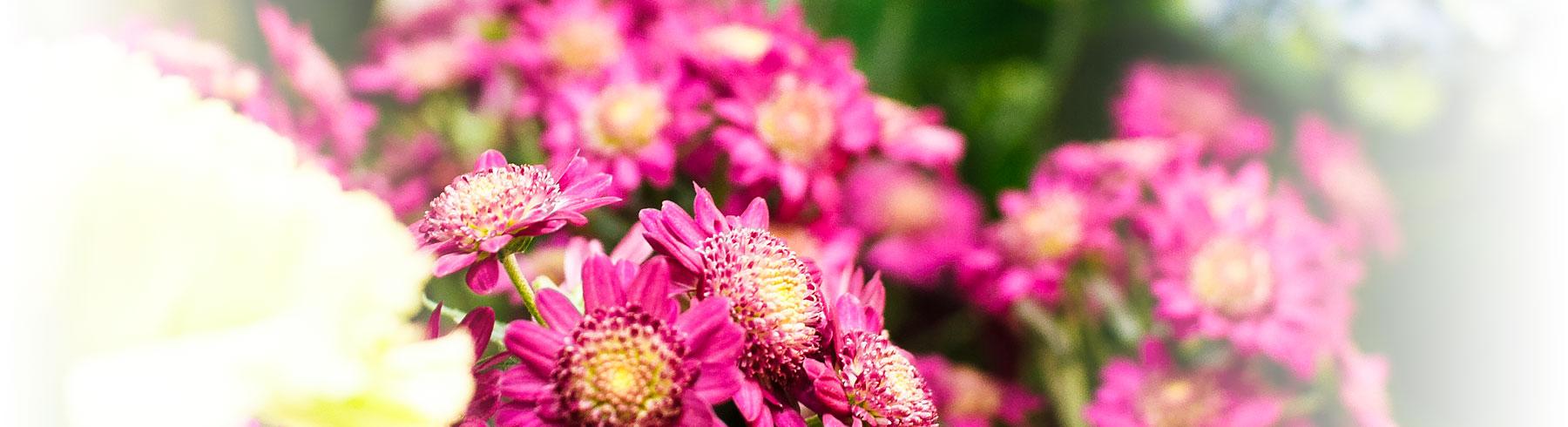 Kontakta Brändmarks Blommor