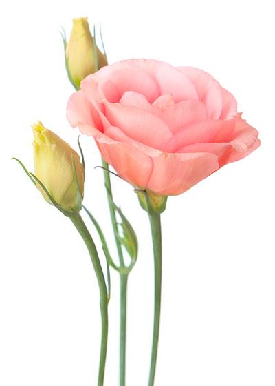 Brändmarks Blommor på Trandared i Borås